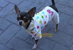 Chihuahuas a la moda. Ropa para Chihuahuas. | Cachorros Yorkshire ...