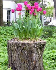 Creare una fioriera da un tronco d'albero abbattuto! 20 idee per ispirarvi…