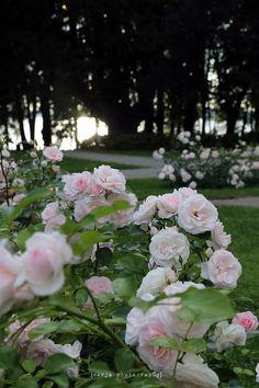arboretum in august