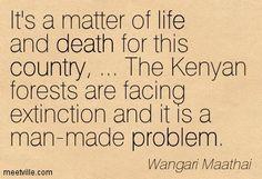 wangari maathai quotes - Google Search