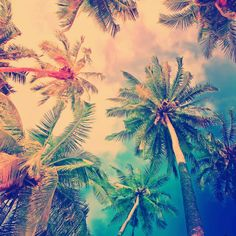 Beach, peace and love tree wallpaper, iphone 5 wallpaper, mobile wallpaper, wallpaper Wallpaper Para Iphone 6, Beste Iphone Wallpaper, Handy Wallpaper, Wallpaper Downloads, Summer Wallpaper, Free Wallpaper For Phone, Love Pink Wallpaper, Wallpaper Awesome, Beach Wallpaper