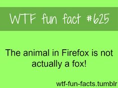 Strange Facts Wtf Fun Facts Crazy Facts True Facts Panda Facts Wtf Fact You Just Realized Wtf Moments The More You Know