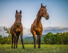 """The boys. """"Stormy"""" and """"Icon"""", our adopted ex-racehorses, taking in the quiet of the sunset on the farm. - Dr. Chris Brown"""