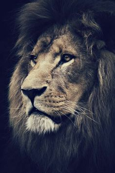 Dignity, Majesty, Strength. He knows who He is