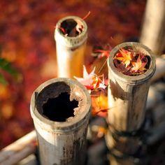 A fall-foliage scene near the Ryoanji Temple (龍安寺), Kyoto Japan Pc Backgrounds Hd, Wallpapers, Banners, Ryoanji, Bamboo Wallpaper, Free Background Photos, Legal Highs, Nature Hd, Multiplication