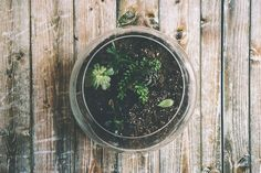 ¿Quieres saber cómo hacer un terrario en casa de manera fácil? ¿Sabes qué es un terrario? Los terrarios actúan como pequeños jardines en miniatura que se crean para poder adaptar el mismo tamaño y forma de los diferentes recipientes para los que están diseñados. Desde hace algunos años, este tipo de elementos se ha considerado [...] La entrada 👨🌾Cómo hacer un terrario en casa de manera fácil👩🌾 se publicó primero en De Materias. Terrarium Diy, Small Terrarium, Terrarium Workshop, Hanging Terrarium, Ficus Pumila, Bottles And Jars, Glass Bottles, Suculentas Diy, Pinterest Inspiration