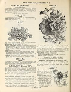 008 Vick's illustrated catalogue and floral guide, 1871