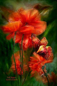 Tall Poppies by Carol  Cavalaris