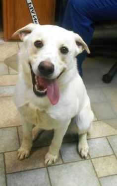 4 / 24 Petango.com – Meet Rocky, a 2 years 1 month Retriever, Labrador / Mix available for adoption in HOLLISTER, MO Contact Information Address 255 Critter Trail , Unit, HOLLISTER, MO, 65672 Phone (417) 332-0172 Website http://www.taneycohealth.org Email simpss2@lpha.mopublic.org