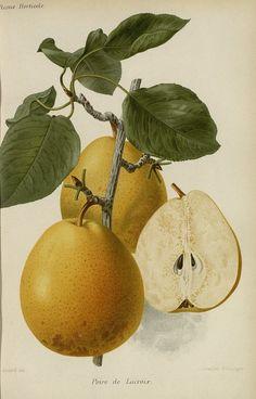 http://bibliotheque-numerique.hortalia.org/items/viewer/1835?ui=embed