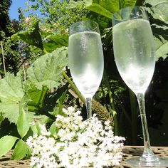 Want a refreshing and delicious drink for your healthy pregnancy diet? Try elderflower cordial, packed with antioxidants and so tasty! Healthy Pregnancy Diet, Pregnancy Smoothies, Pregnancy Cravings, Pregnancy Nutrition, Exercise During Pregnancy, Pregnancy Workout, Summertime Drinks, Summer Drinks, Elderflower Cordial