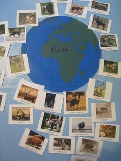 Animals around the world project