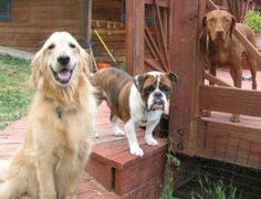 Dog training tip – timing is everything!