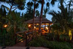 Mediterranean Residential - tropical - landscape - other metro - Cape Reed USA