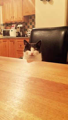 I kicked over my cats milk and had no replacement. He sat opposite me as I ate my dinner looking at me like this.