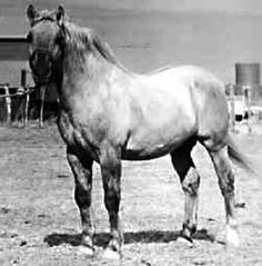 hollywood gold quarter horse | Hollywood Gold Quarter Horse Legend