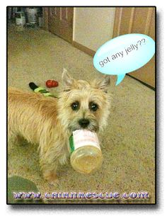 Col. Potter Cairn Rescue Network: Wacky Wednesday!    Got any jelly?