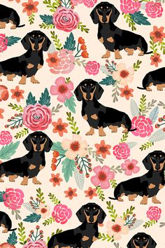 doxie flowers florals dachshund bypetfriendly - Hand illustrated Daschunds and flowers on fabric, wallpaper, and gift wrap. Adorable dogs with pink and peach flowers on a cream background. #pets #petfabric #design #surfacedesign #makeit #petprojects #diypet #fabric #creative