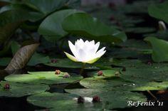 spiritualita - Cerca con Google Google, Plants, Plant, Planets