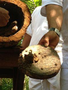 ¿Sabías que para los mayas la abeja melipona es sagrada ya que su miel tiene propiedades medicinales?