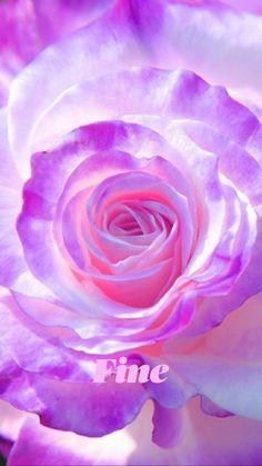 Beautiful Flowers Wallpapers, Beautiful Rose Flowers, Pretty Wallpapers, Exotic Flowers, Amazing Flowers, Pretty Flowers, Flowers Nature, Purple Wallpaper, Flower Wallpaper