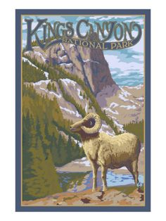 Kings Canyon Nat'l Park - Big Horn Sheep - Lantern Press Poster, c.2009