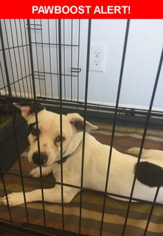 Is this your lost pet? Found in Phoenix, AZ 85020. Please spread the word so we can find the owner!  Description: Friendly male black and white terrier mix. No tag or chip  Nearest Address: Near 12th st & northern