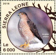 Stamp: Sharp-shinned Hawk - Accipiter striatus (Sierra Leone) (Hawks) Mi:SL 6851