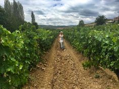 On the Wine Trail in Central Macedonia: Popova Kula, Demir Kapija & Stobi