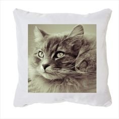 Coussin blanc chat collection chat fauve