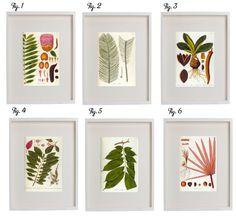 Free Botanical Prints - Like Ballard Designs DIY Diy Paper, Paper Crafts, Diy Crafts, Illustration Botanique, Relaxing Art, Idee Diy, Free Prints, Botanical Prints, Diy Art