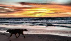 #Lake #Michigan #sunset #dog