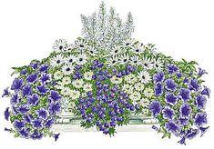 Balkonpflanzen-Set » Blau-weißer Traum«