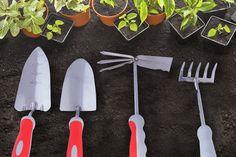 Zasadi svoj prvi cvet 🌷  https://goo.gl/JXPfI3 #Beorol #bašta #garden #tools
