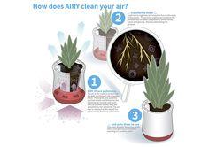 """Kickstarter Produkt - AIRY - Hochwirksame Luftreinigung mit Zimmerpflanzen. AIRY arbeitet ohne Strom, ohne Chemmie, ohne Filter. Wir kopieren nicht die Natur, sondern steigern die Leistungsfähigkeit einer normalen Zimmerpflanze so stark, dass acht Pflanzen in herkömmlichen Töpfen durch ein AIRY-System ersetzt werden. Zudem liefern wir den """"grünen Daumen"""" gleich mit: Durch den großen Wassertank benötigt AIRY wenig Aufmerksamkeit und arbeitet trotzdem rund um die Uhr für Dich."""
