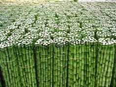 Green - Bamboo