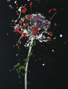 Nanna Hanninen - Finnish artist Nanna Hanninen's latest series of captures are blossoming. Using minimalist black and white photographs of flowers and plants,. Abstract Photography, Illustration Art, Illustrations, Art Pieces, Bloom, Sculpture, Gallery, Floral, Artist
