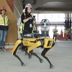 SpotWalk is the first of its kind robotic construction progress documentation solution for Boston Dynamics' Spot robot! Cool Robots, Robot Art, New Technology Gadgets, Robot Technology, Medical Technology, Futuristic Robot, Futuristic Technology, Cool Tech Gadgets, Arduino Projects