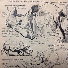 Reinier Gamboa rhino sketches