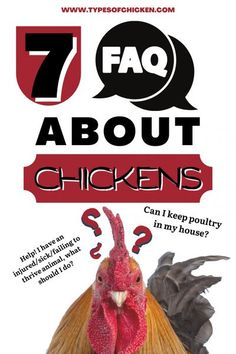 Below are some questions we frequently get here that may help you if you have them as well. Types Of Chickens, Keeping Chickens, Chickens And Roosters, Meat Chickens, Raising Chickens, Rabbits, Backyard Chicken Coops, Chickens Backyard, Chicken Breeds