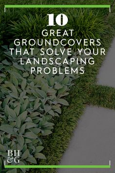 10 Great Groundcover Plants Lamb's ear is a perennial that loves sun or partial shade where its silvery-green leaves can sprawl. We love all of these great groundcovers. Shade Plants, Landscape Problems, Ground Cover Plants, Landscape, Lambs Ear Plant, Hosta Plants, Perennials, Plants, Shade Perennials