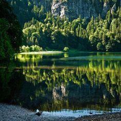Bayerischer Wald #bavaria #forest #nature