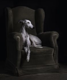 10 Cool Facts About Greyhounds - Dogs Tips & Advice | mom.me