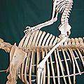 A dada sur mon squelette
