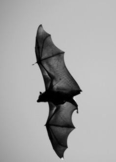 Bats, wings, curved lines, structured, black, free, flying