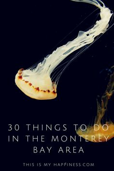 30 Things to do in the Monterey Bay Area of California
