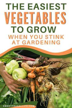 Starting A Vegetable Garden, Vegetable Garden For Beginners, Gardening For Beginners, Gardening Tips, Easy Vegetables To Grow, Veggies, Planting Pumpkins, Easy Garden, Garden Fun