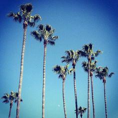 palm tress <3