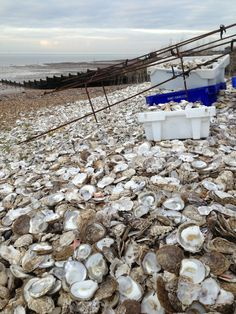 Whitstable Beach in Whitstable, Kent