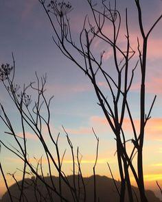 Big Sur #california #bigsur #naturereserve #nature #naturaleza #wildlands #wilderness #sunset #beauty #love #calocals - posted by Gerardo Ceballos https://www.instagram.com/gerardo.cg - See more of Big Sur, CA at http://bigsurlocals.com